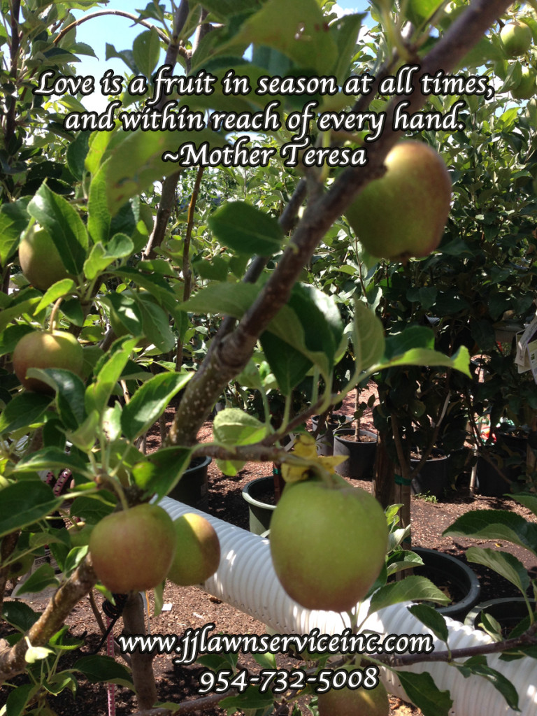 Love is a fruit in season at all times within reach of every hand